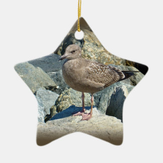 Juvenile Great Black-Backed Gull Ceramic Ornament