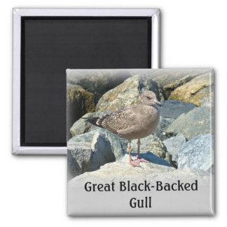 Juvenile Great Black-Backed Gull Magnet