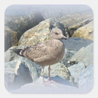 Juvenile Great Black-Backed Gull Square Sticker