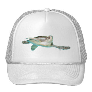 Juvenile Green Sea Turtle Hats