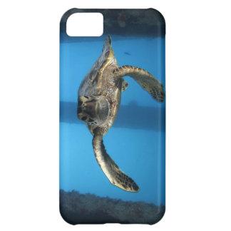 Juvenile green sea turtle iPhone 5C case