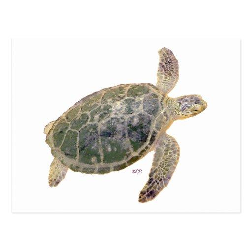 Juvenile Green Sea Turtle Postcard