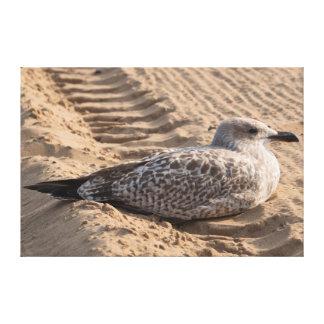 Juvenile Herring Gull Canvas Prints