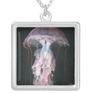 Juvenile jellyfish, Chrysaora (Pelagia) Silver Plated Necklace