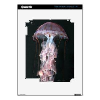 Juvenile jellyfish, Chrysaora (Pelagia) Skins For iPad 3