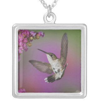 Juvenile male Ruby Throated Hummingbird in Silver Plated Necklace