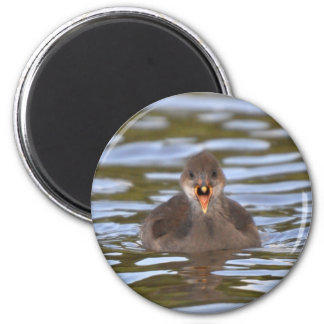 Juvenile Moorhen 2 Inch Round Magnet