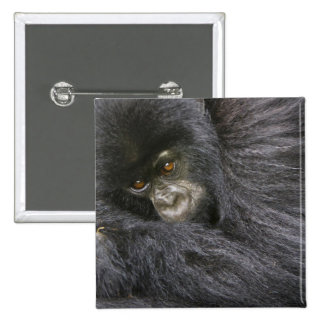 Juvenile Mountain Gorilla 3 Button