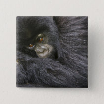 Juvenile Mountain Gorilla 3 Pinback Button