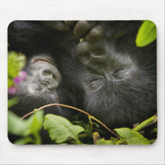Juvenile Mountain Gorilla and his mother Mouse Pad