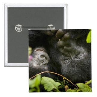 Juvenile Mountain Gorilla and his mother Pinback Button