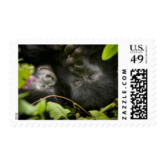 Juvenile Mountain Gorilla and his mother Stamps