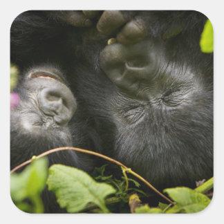 Juvenile Mountain Gorilla and his mother Square Sticker