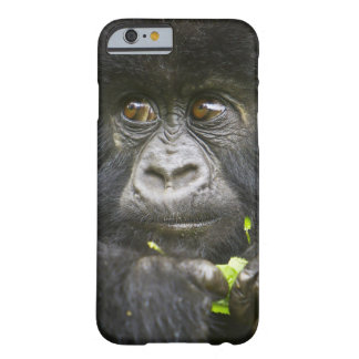 Juvenile Mountain Gorilla feeds on tender leaves 2 Barely There iPhone 6 Case