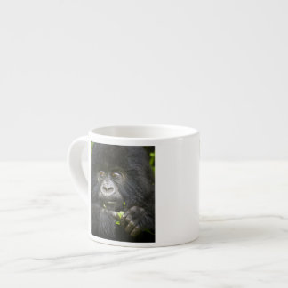 Juvenile Mountain Gorilla feeds on tender leaves 2 Espresso Cup