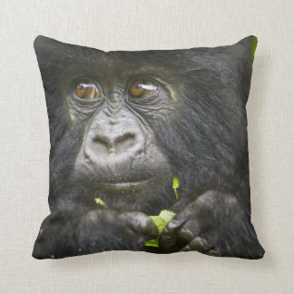 Juvenile Mountain Gorilla feeds on tender leaves 2 Pillows