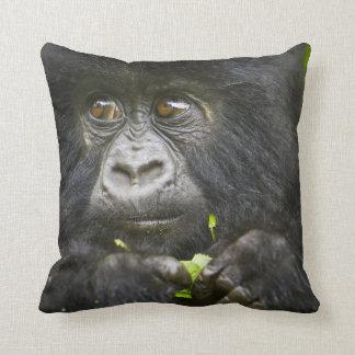 Juvenile Mountain Gorilla feeds on tender leaves 2 Throw Pillow