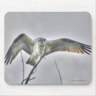 Juvenile Osprey Fish-Eagle Wildlife Photo Scene Mouse Pad