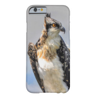 Juvenile Osprey Fish-Eagle Wildlife Photograph Barely There iPhone 6 Case