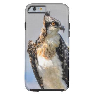 Juvenile Osprey Fish-Eagle Wildlife Photograph Tough iPhone 6 Case