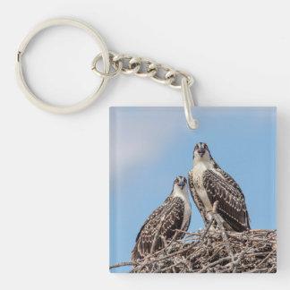 Juvenile Osprey in the nest Keychain
