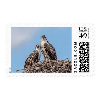 Juvenile Osprey in the nest Postage