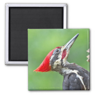 Juvenile Pileated Woodpecker Profile Gifts Apparel Magnet