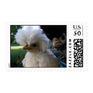 Juvenile Polish Crested Chickens Postage