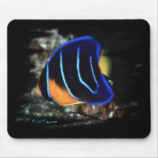 Juvenile Queen Angelfish Mouse Pad