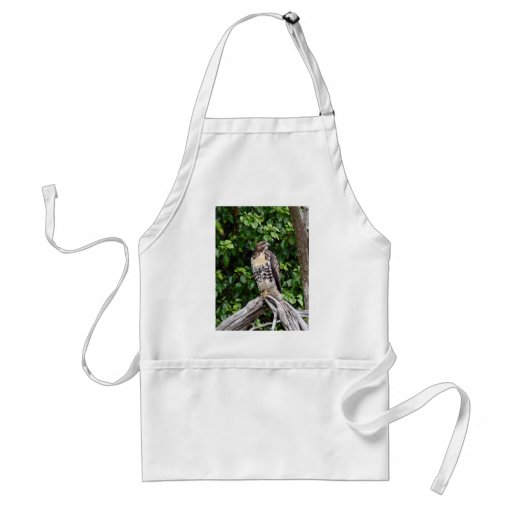 Juvenile red-tailed hawk aprons