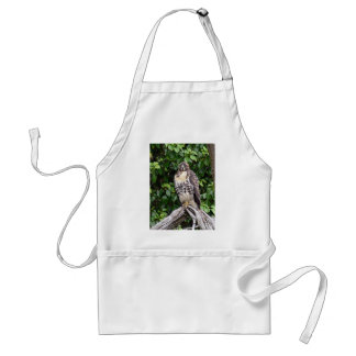 Juvenile red-tailed hawk apron