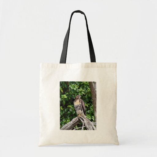 Juvenile red-tailed hawk budget tote bag