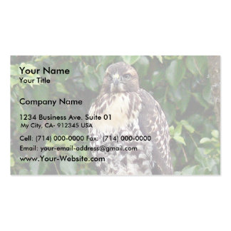 Juvenile red-tailed hawk Double-Sided standard business cards (Pack of 100)