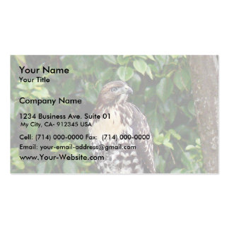 Juvenile red-tailed hawk business card