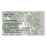 Juvenile red-tailed hawk business cards