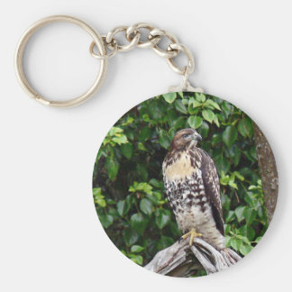 Juvenile red-tailed hawk key chain
