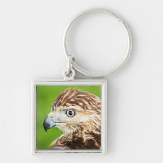 Juvenile Red Tailed Hawk Keychain