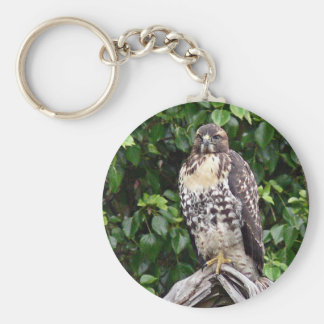 Juvenile red-tailed hawk keychain