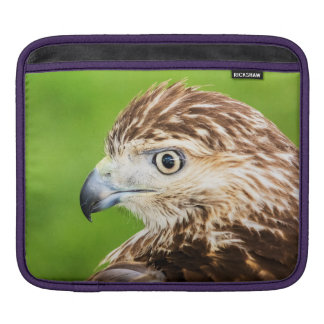 Juvenile Red Tailed Hawk Sleeve For iPads