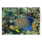 Juvenile Regal Angelfish Pygoplites Card
