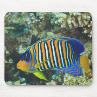 Juvenile Regal Angelfish Pygoplites Mouse Pad