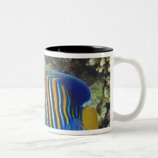 Juvenile Regal Angelfish Pygoplites Two-Tone Coffee Mug