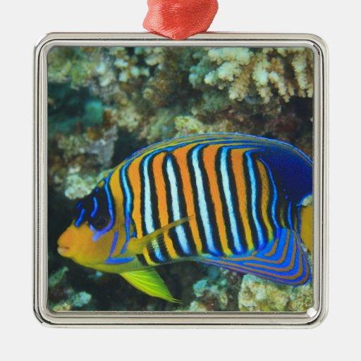 Juvenile Regal Angelfish Pygoplites Square Metal Christmas Ornament