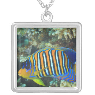 Juvenile Regal Angelfish Pygoplites Silver Plated Necklace