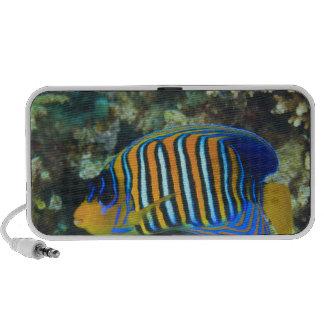 Juvenile Regal Angelfish Pygoplites Laptop Speaker