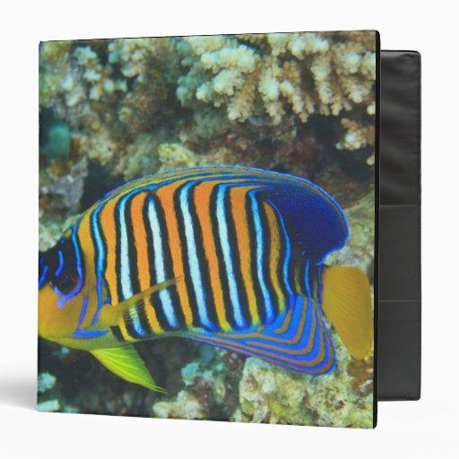 Juvenile Regal Angelfish Pygoplites Vinyl Binder