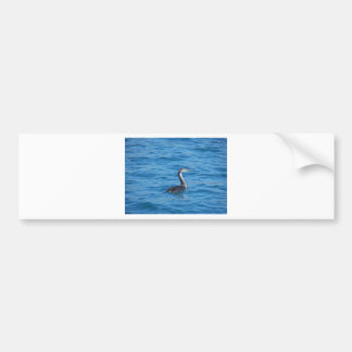 Juvenile Shag fishing Bumper Sticker