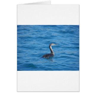 Juvenile Shag fishing Card