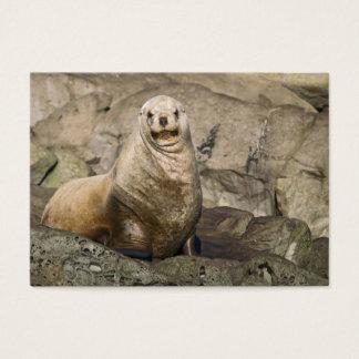 Juvenile Steller Sea Lion - Business Cards