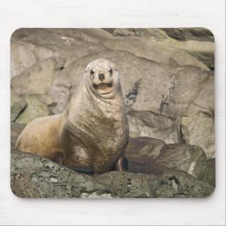 Juvenile Steller Sea Lion - Mouse Pad
